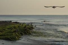 Seagulls on seashore Stock Photo