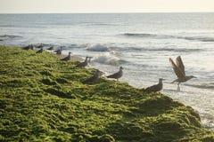 Seagulls on seashore Royalty Free Stock Photography