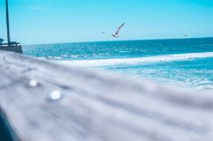 Seagulls by the seashore. A perfect summer day by the beach on the pier royalty free stock photography