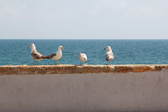 Seagulls on seashore Stock Photos