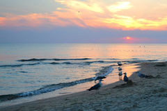 Seagulls on the seashore. sunset. Stock Photo