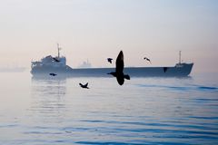 Seagulls and a ship. Sea gulls and a ship in the sea Stock Photography
