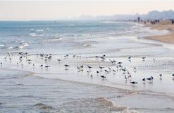Seagulls on the shore. Adriatic sea beach. Rimini Italy. Seagulls on the beach of Rimini, ITaly stock photography