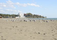 Seagulls on the beach sand Stock Photography