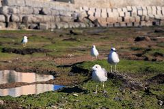 Seagulls on the shore in Cadiz, Andalusia, Spain royalty free stock image