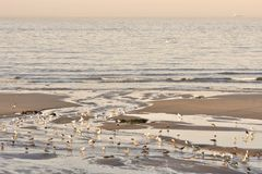 Seagulls on morning beach at low tide stock photos