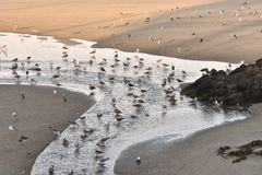 Seagulls on morning beach at low tide royalty free stock images