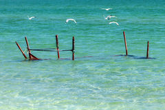 Seagulls on the shore of the Sea of Azov in Crimea Stock Images