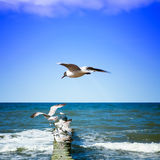 Seagulls on shore of the Sea Stock Photography