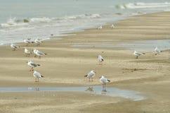 Seagulls on the shoreline Royalty Free Stock Photo