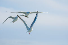 Seagulls. A shot of flying seagulls Stock Photos