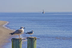 Seagulls and Shrimp Boat. Seagulls on two posts with a shrimp boat in the background Royalty Free Stock Images
