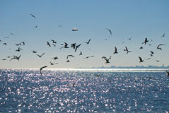 Seagulls and silhouette of the city Royalty Free Stock Photography