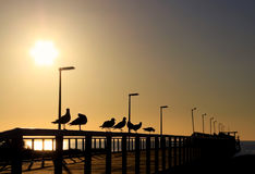 Seagulls in Silhouette on a Wooden Jetty. In front of the Evening Sun.  Larg's Bay, Adelaide, Australia Stock Photo