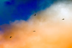 Seagulls silhouettes flying under sunset beautiful clouds Royalty Free Stock Photo
