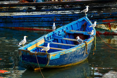 Seagulls sit on the boat. Morocco Royalty Free Stock Photography