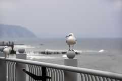 Seagulls sit on a parapet against the background of the gloomy sea stock photography