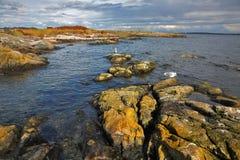 Seagulls sit on stones of passage Stock Photos