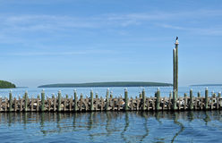 Seagulls siting on harbor pole in bayfield, WI Royalty Free Stock Photo