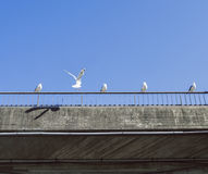 Seagulls sitting on a concrete bridge railing a beautiful summer day. stock images