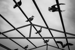 A seagulls sitting at the construction Stock Image