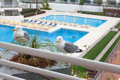 Seagulls sitting in front of the balcony Stock Image