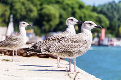 Seagulls sitting on a harbour in Venice, Italy Stock Photos