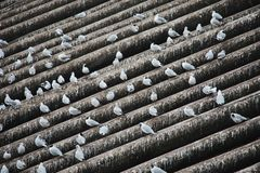Seagulls sitting on long beams - Diagonal - Droppings all around stock images
