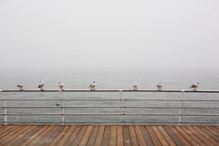 Seagulls sitting on the railing Stock Photography