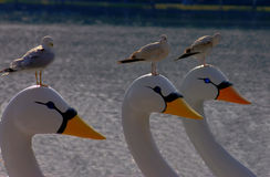 Seagulls sitting on swan boats. Seagulls sitting on the heads of swan boats Royalty Free Stock Image