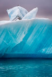 Seagulls sitting on top of iceberg, Iceland Stock Images