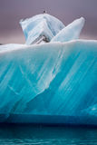 Seagulls sitting on top of iceberg, Iceland Stock Photography