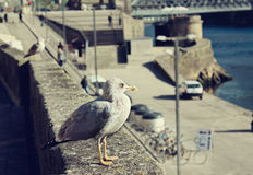 Seagulls are sitting on waterfront Royalty Free Stock Photography