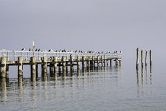 Seagulls sitting on a wooden pier Royalty Free Stock Photography