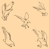 Seagulls sketch. Pencil drawing by hand. Figure in vintage style. Vector Stock Photos