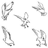 Seagulls sketch. Pencil drawing by hand. Vector Stock Photo