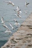 Seagulls skjuta i höjden dramatiskt med staketet Arkivbilder