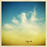 Seagulls in the sky Royalty Free Stock Photography