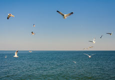 Seagulls at the sky. Flying seagulls at the blue sky Royalty Free Stock Photo
