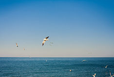 Seagulls at the sky. Flying seagulls at the blue sky Royalty Free Stock Photos