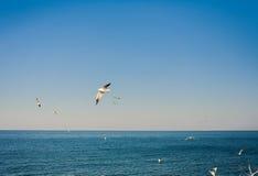 Seagulls at the sky Royalty Free Stock Photos