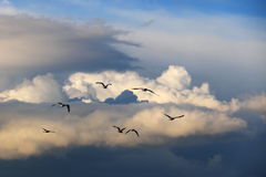 Seagulls in the sky Stock Images