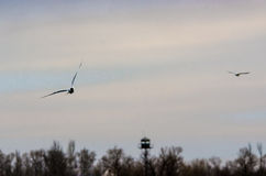Seagulls in the sky Stock Photos