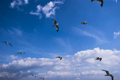 Seagulls are on sky Stock Photography