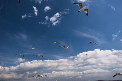 Seagulls are on sky Royalty Free Stock Photos