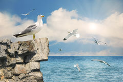 Seagulls in the sky.Nature seascape background Stock Image