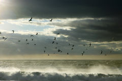 Seagulls between sky and ocean royalty free stock photo