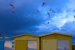 Seagulls in the sky over the beach huts in Seaford stock images