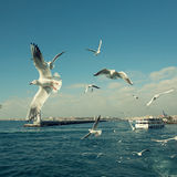 Seagulls in the sky under sea in istanbul Royalty Free Stock Photo