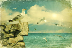 Seagulls in the sky.Vintage Stock Photos